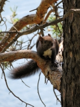 Squirrel on the hike at Lake Baikal from Listvyanka to Bolshie Koty