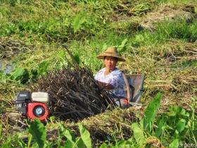 Lady at Maing Thauk