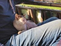 Timo's cat friend