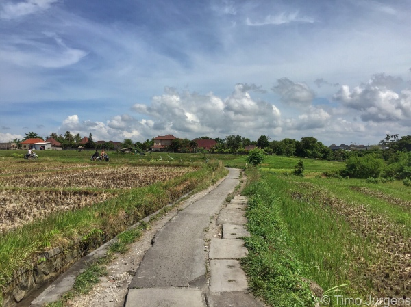 Rice paddy road