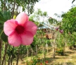 Eco Resort Ko Phaluai