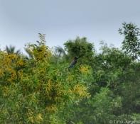 Blue birds Khanom
