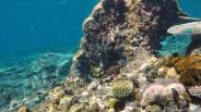 Beautiful Coral Palawan TAO